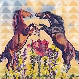freetoedit horses flowers shapedmask stormeday ircredrose