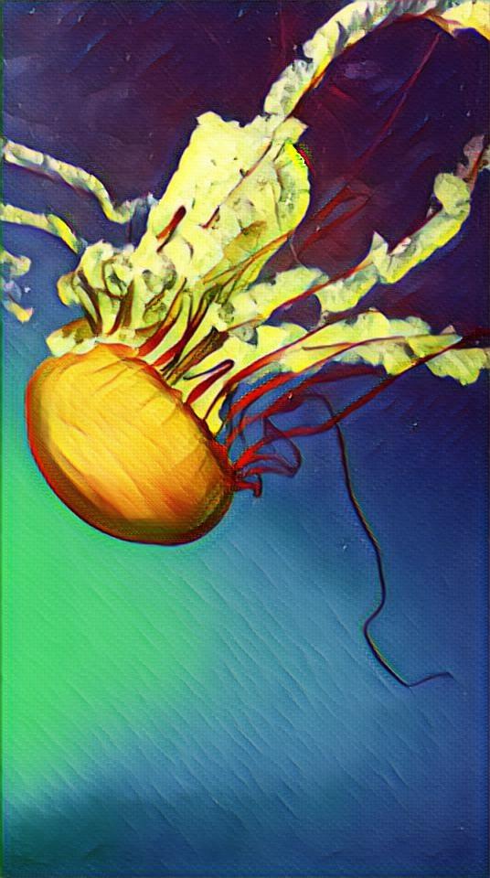 #moodygardens #aquarium #jellyfish