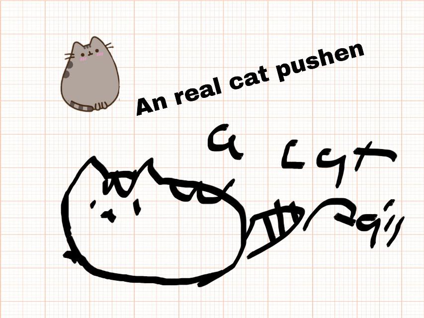 #foto cat