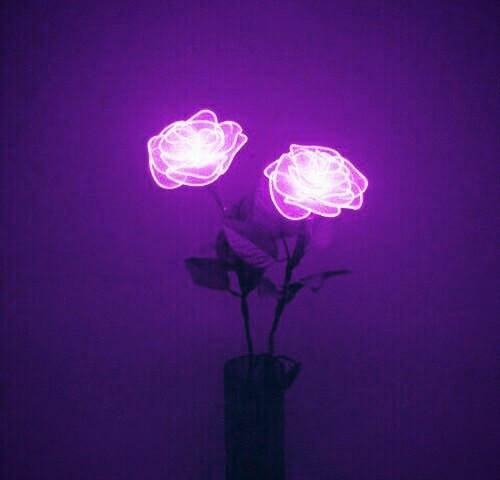 #FreeToEdit #purple #flowers #neon #lights