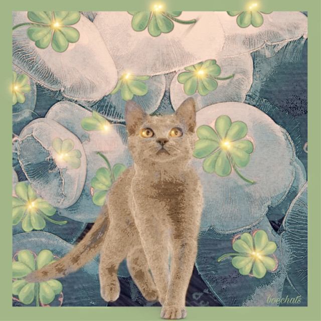 #freetoedit #cat #clover4leaf #lucky
