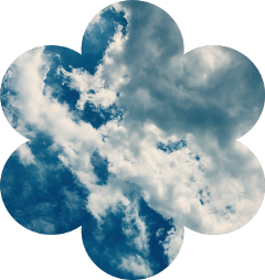 flower sky clouds freetoedit