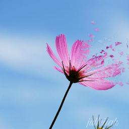flower flowerpower pretty pink sky freetoedit
