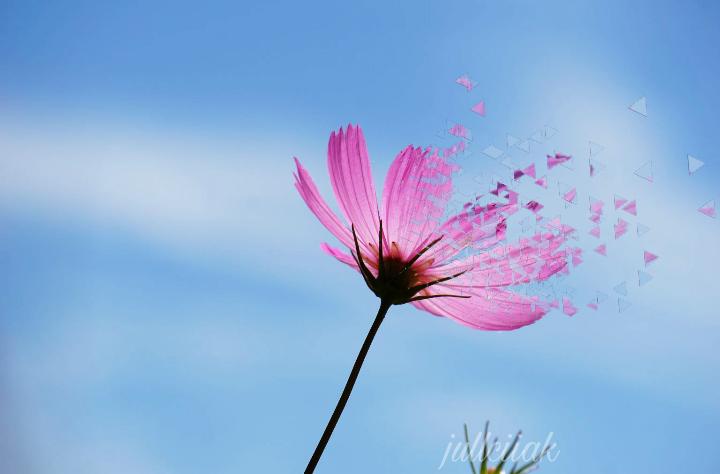 #flower #flowerpower #pretty #pink #sky #bluesky #blue_sky  #freetoedit
