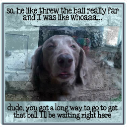 pets freetoedit dogs labrador labradorretriever