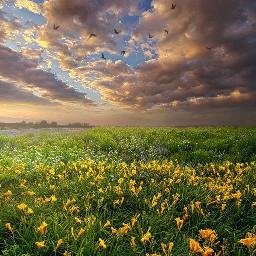 freetoedit summertime vote4me remixit landscape
