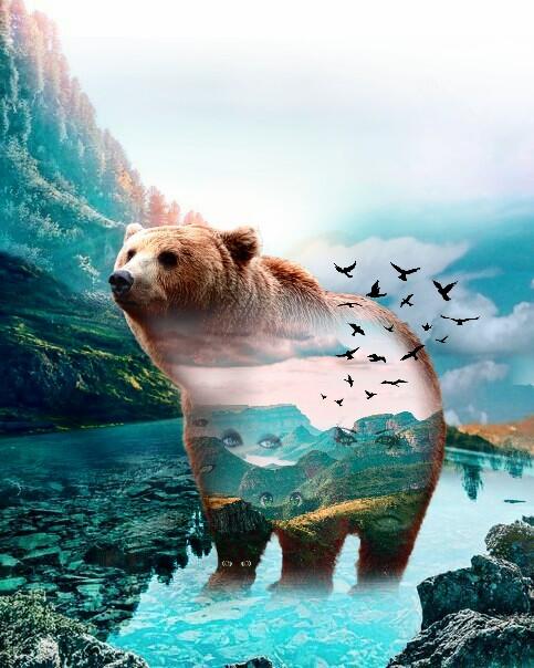 #freetoedit #bear #animal #doubleexposure   #beautiful @sovs I tried it #surreal #scenery #Sunday #morning #createsomethingneweveryday #new