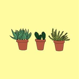 freetoedit plants beach art interesting