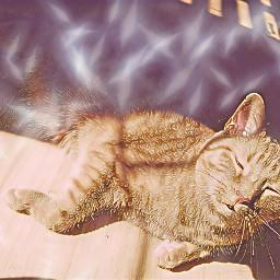 cloak&dagger newbrushtools cat kitty sunning eccloakanddagger