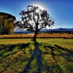 angeleyesimages tree landscapephotography landscape nikon