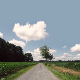 freetoedit roadtowhere countryroad cornfield myoriginalphoto