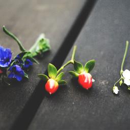 freetoedit pcredwhiteandblue redwhiteandblue nature plant