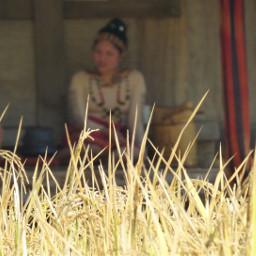pcgrass grass grasschallenge grasses grassfield