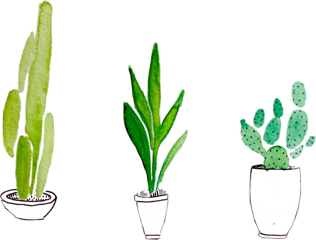 sticker plant plants cactus green tumblr png aesthetic