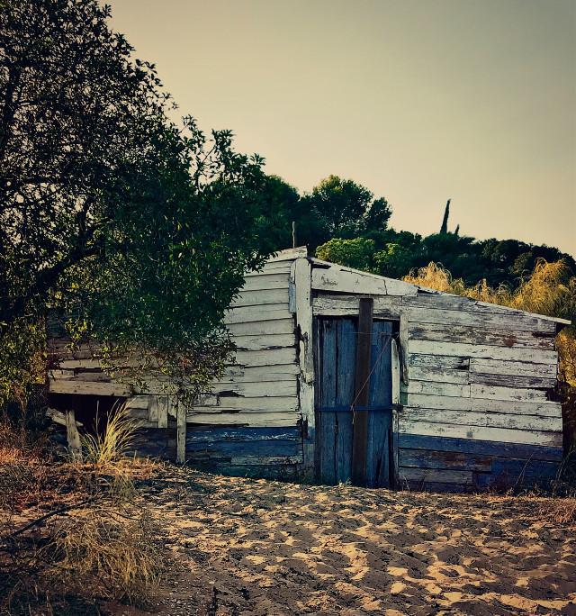 #lateafternoon #summertime #abandonedbeachhut #wildvegetation #treesandbushes #beachsand #warmsunnylightandshadows #alwayslookingaround #decadentbeauty #beachphotography #freetoedit
