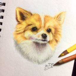 art drawing gift pomeranian dog