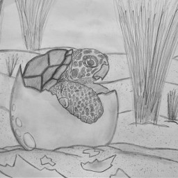 freetoedit cool drawing pencil beach