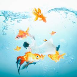 summer photoshop goldfish water girl
