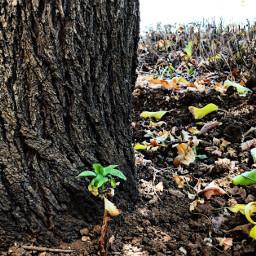 freetoedit treetrunk shoot