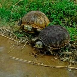 turtletime family speedy pokey parents