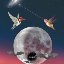 srcwhitemoon whitemoon freetoedit galaxy birds