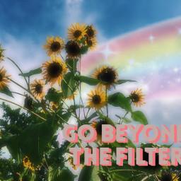 freetoedit sunflowers rainbow go beyond