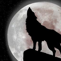 srcwhitemoon whitemoon freetoedit contest wolf