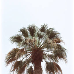freetoedit pcthroughmylense nature palmtree negativespace