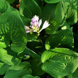 freetoedit floralcanvas floralbackground floralpattern nature