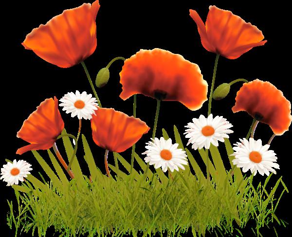 #ftestickers#flowers#poppies