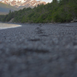 beach alaska photography depthoffield photooftheday freetoedit