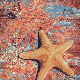 freetoedit summervibes textures starfish seatreasures