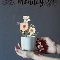 ircmondaymornings mondaymornings freetoedit flowers mondaymorning