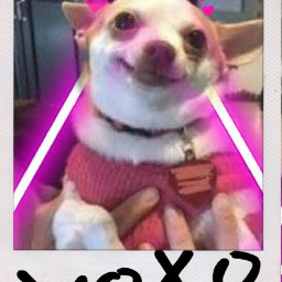 freetoedit perros🐶 perros