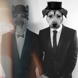 freetoedit dogs echumananimalhybrid humananimalhybrid