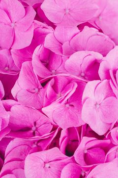 Freetoedit Pink Flower Flowers Background