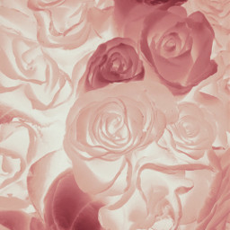 freetoedit abstractnature flowers roses myphotomyedit