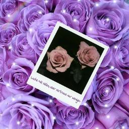 flowers🌹 purple laughing happy ploaroid freetoedit