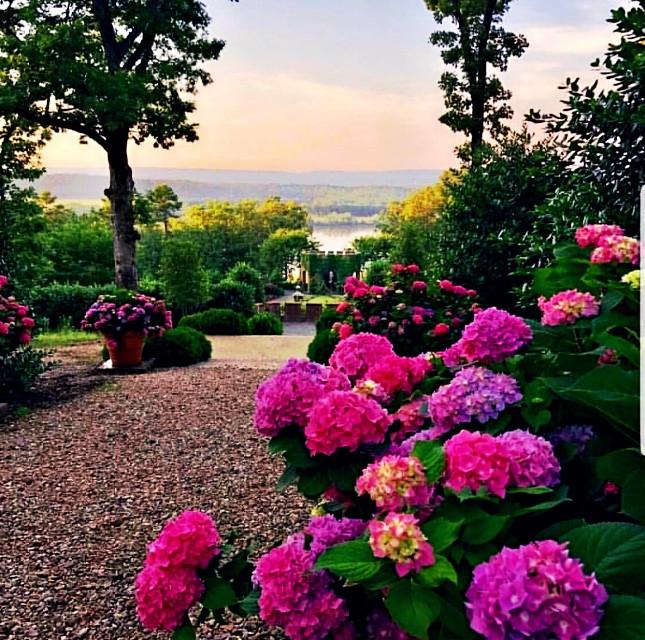 #freetoedit #purples #pinks #flowers #sky #trees #water #beautiful #vibranteffect
