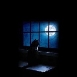 blackcat window moon somewheremycatbatmaniswaitingforme freetoedit