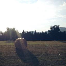 summer nature trees grass field
