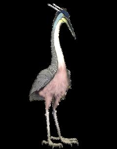 egret bird standing pink freetoedit