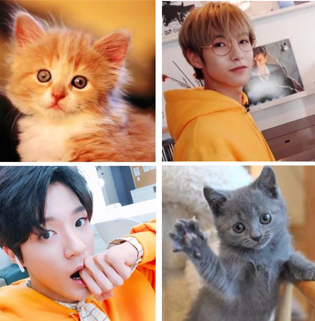 #noren #jeno #renjun #cat