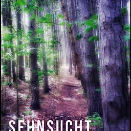 freetoedit quotes walkinthewoods hikingadventures hikingtrails