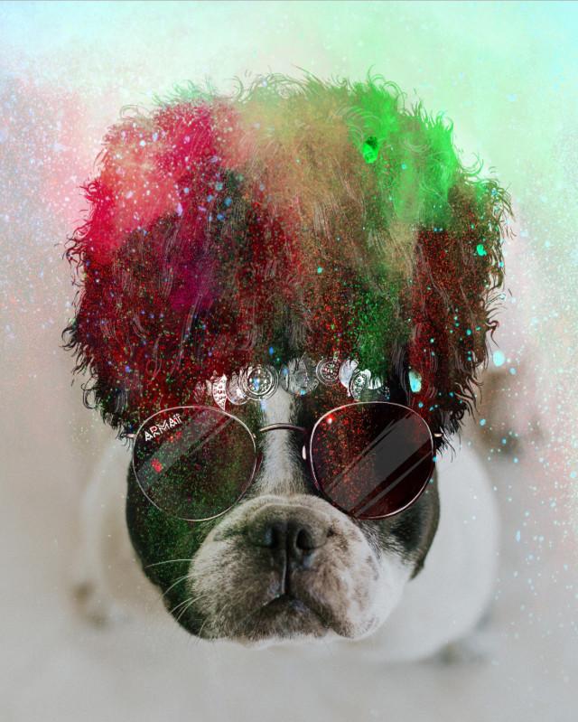 #freetoedit #incognito #colorsplash #doglover #dog #cool #sunglasses #fun