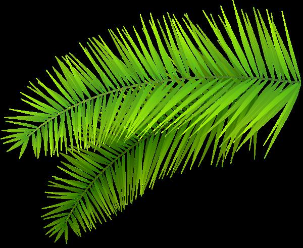 Plant Png Tumblr