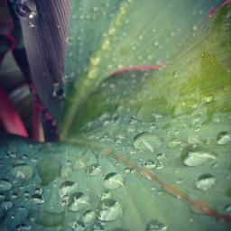 dewdrop pcdrops drops