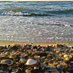 photography nature sea seashells freetoedit