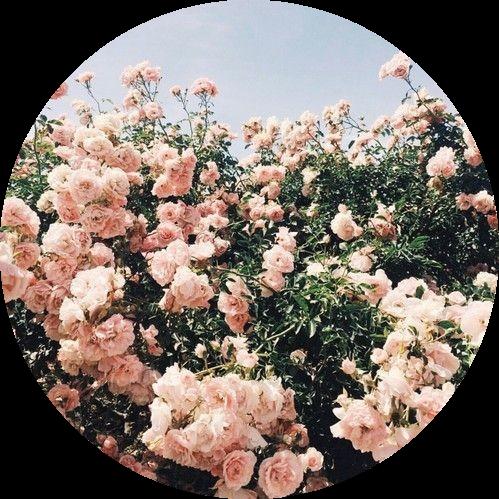 tumblr aesthetic flowers flower rose roses...