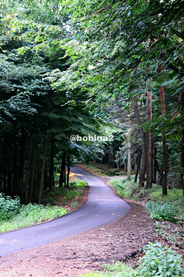 #nature #forest #trees #landscape